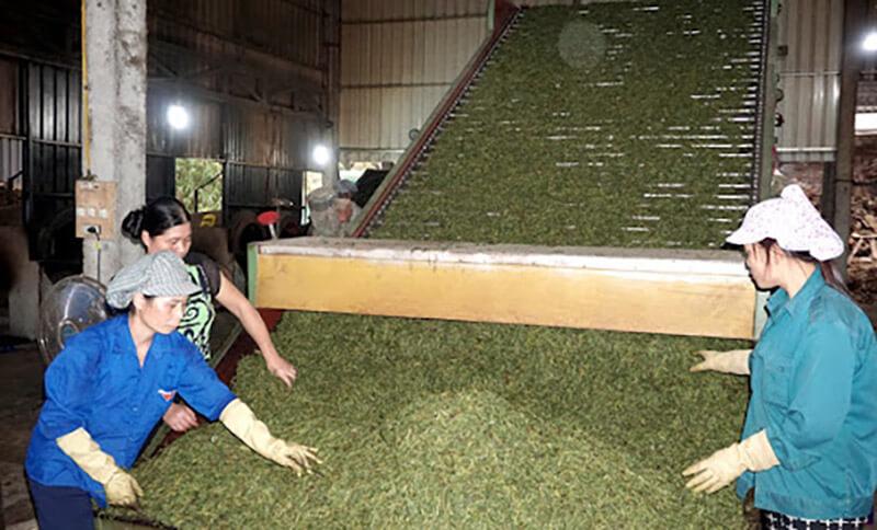 Băng tải sấy trà công nghiệp
