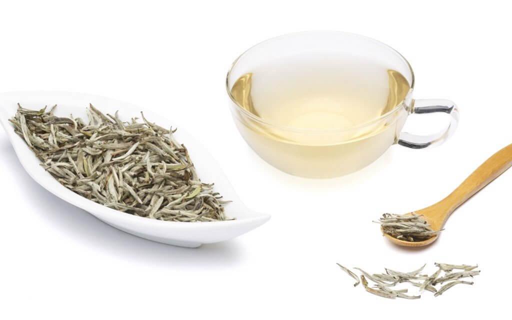 bạch trà 2