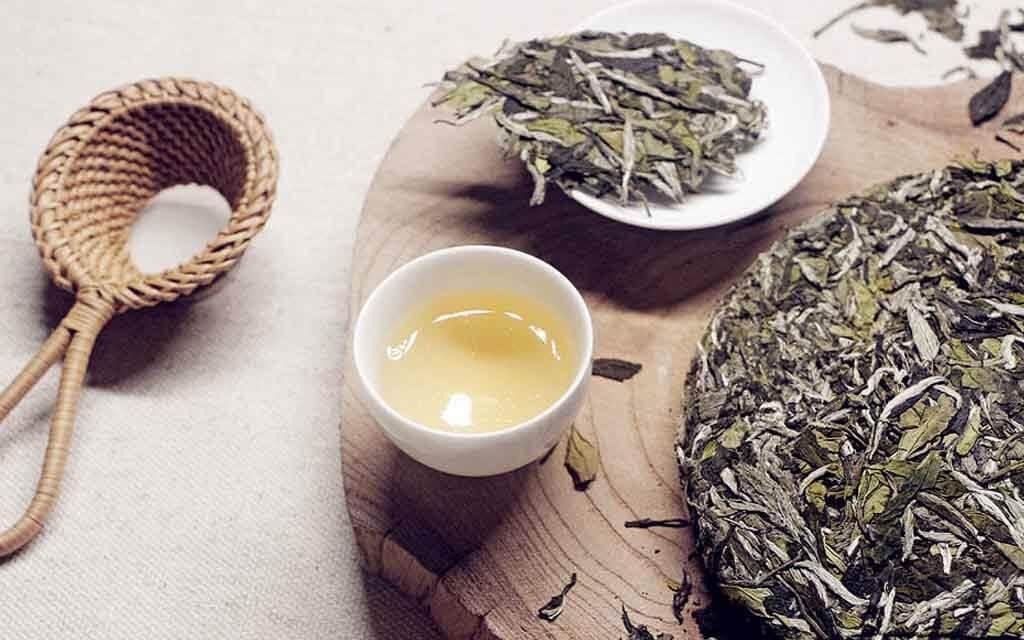 bạch trà 3