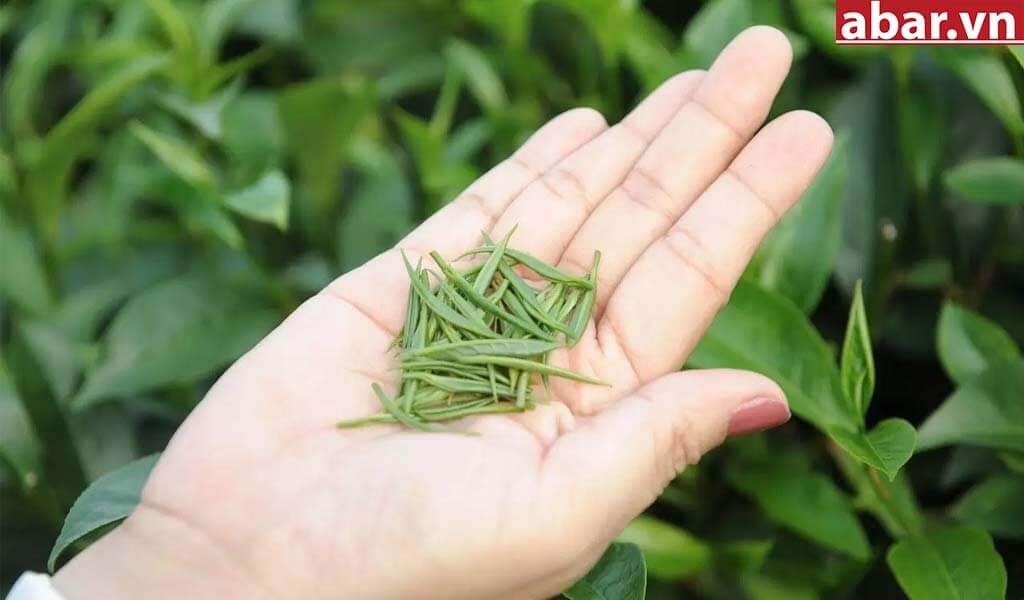 trà đinh 2